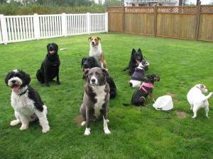 Coddled Canines In-home boarding and daycare for dogs