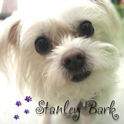 Stanley Bark Dog Daycare & Grooming